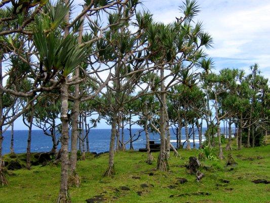 Saint Philippe, île de la Réunion