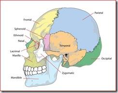 skullbonesdiagram